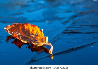 yellow leaf on ice in a clear day, season scecific, autumn symbol