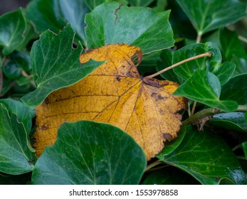 yellow leaf, sign of autumn