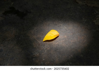 A yellow leaf in the sunlight spot
