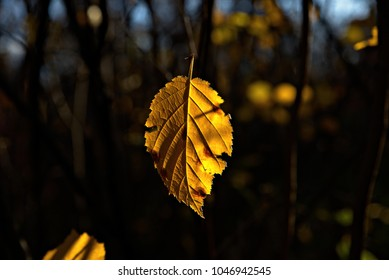A yellow leaf suspended in the air, with a blurry background
