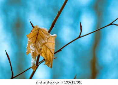 Yellow leafs with blue background
