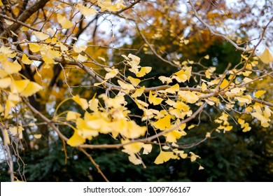 yellow of leave
