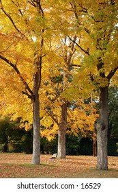 Yellow leaves adorn trees at a playground in New England