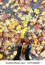 a lot of yellow leaves in the autumn forest