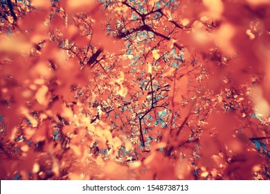 yellow leaves bokeh seasonal background / beautiful autumn leaves yellow branches abstract background, leaf fall concept