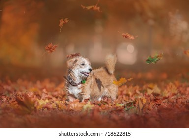 yellow leaves fall on dog