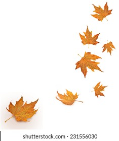 yellow leaves falling from the sky in white background- autumn season - isolated