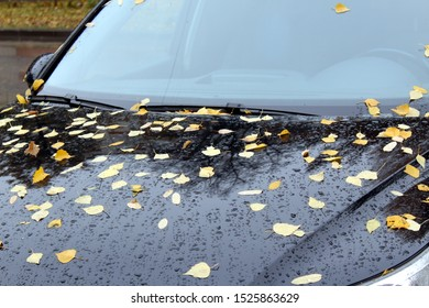 yellow leaves fell on the hood of a car on a rainy day