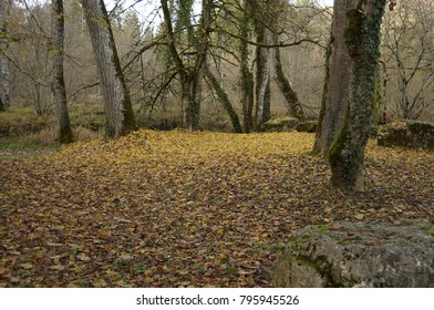 Yellow leaves in forest. Colorful glade forest in fall.