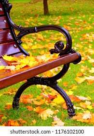 Yellow leaves lie on bench in park in the autumn