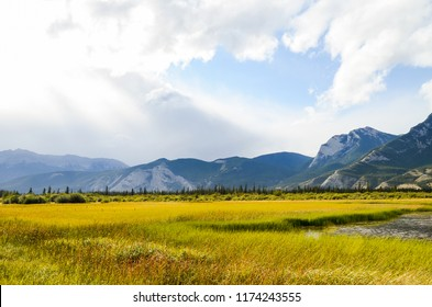 Yellow leaves and Mountain range along Athabasca River in Jasper in Autumn, Canadian Rockies, Alberta, Canada