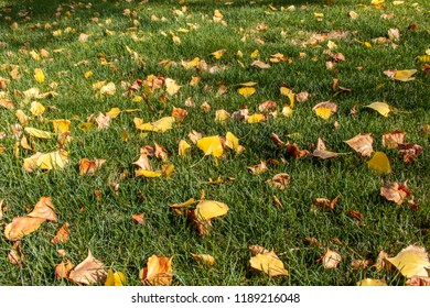 Yellow leaves on the grass