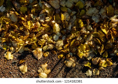 Yellow leaves on the ground. Autumn background