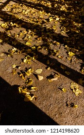Yellow leaves on the ground in the shadows of the trees