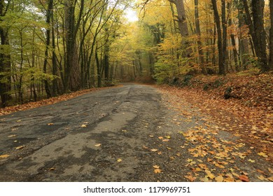 Yellow leaves on the road in the autumn forest