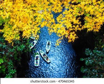 yellow leaves in Takachiho Gorge,Miyazaki,Japan