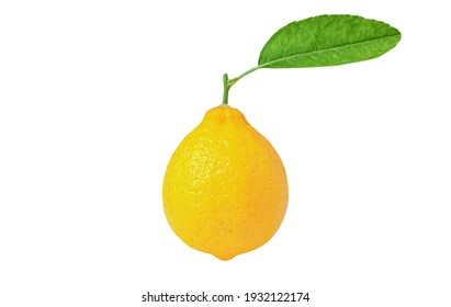 yellow Lemon with green leaves isolated on white background