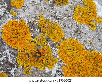 yellow lichen growing on old stone wall