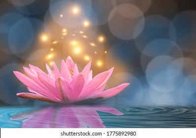 Yellow light lotus Blue background.
