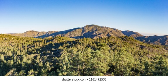 Yellow light from sunrises covers the pine forest and mountains of the Angeles National Forest.