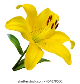 yellow lily isolated on white background