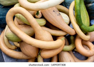 Yellow long pumpkins or zucchini