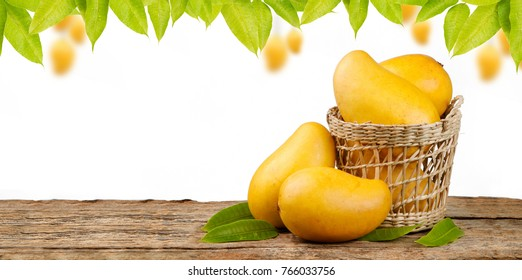 Yellow mango in basket on wood table with mango tree and white background