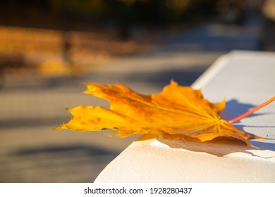 yellow maple autumn leaves fallen on classic white railing