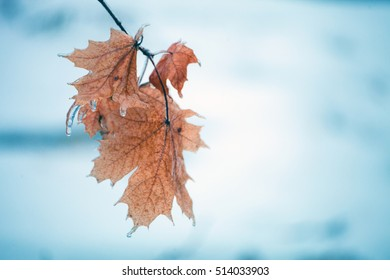 Yellow maple leaf. Autumn leaf fall. Freezing rain. Leaves and tree branches in ice.