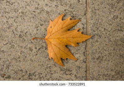 Yellow maple leaf in the city street in autumn