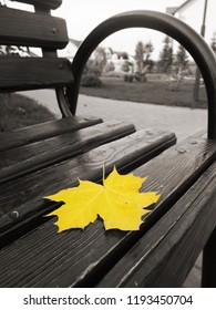 Yellow maple leaf lies on a wooden bench. Signs of autumn