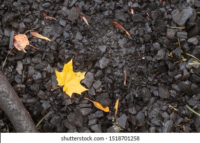 Yellow maple leaf lying in black ash on the site of the fire, yellowed maple leaf in the ashes, the texture of the earth and ash, autumn background, embers and fallen from the tree orange leaf