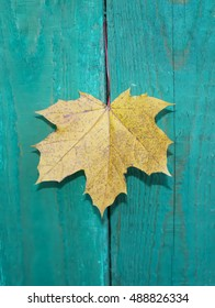 Yellow maple leaf on colorful old wooden background outdoors