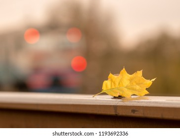 Yellow maple leaf on old rusty rails. Concept of loneliness and the onset of autumn