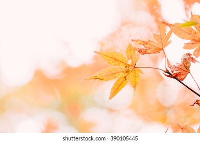 Yellow maple leaf, selective focus with nice bokeh background