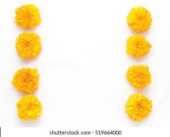 Yellow marigold flower isolated on white background