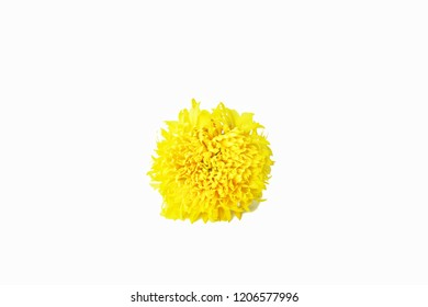 Yellow marigold Placed on a white background.