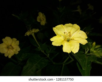 Royalty Free Night Blooming Flowers Images Stock Photos Vectors
