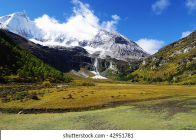 Yellow meadow in front of snow mountain, in Daocheng, SiChuna, China