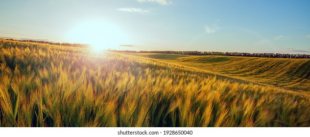 Yellow meadow under blue sky with clouds. Beautiful nature sunset landscape