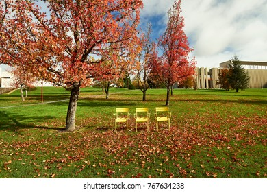 yellow metal chairs in the garden under a liquidambar tree