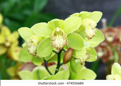 Yellow mint orchids on natural background