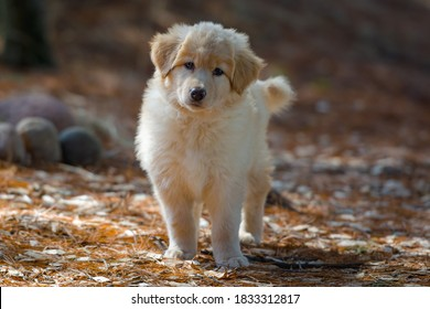 Yellow mixed-breed puppy standing inquisitively