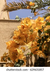 Yellow Moroccan Flowers