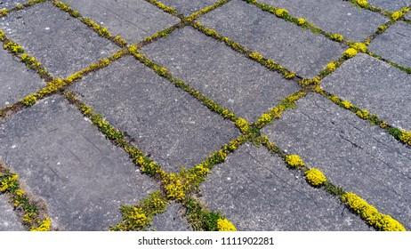 Yellow moss between concrete slabs