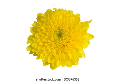 Mums flowers images stock photos vectors shutterstock yellow mum flower isolated on white background mightylinksfo