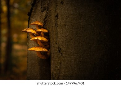 Yellow mushroom growing out of a tree. Amazing and pure natural detail. Peaceful and warm autumn tones. Curvy mushrooms, almost like curiously looking out.