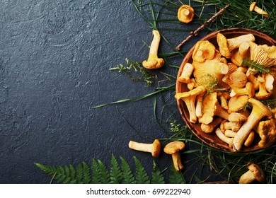 Yellow mushrooms chanterelle (cantharellus cibarius) in vintage plate with forest plants on dark kitchen table top view. Copy space for text.
