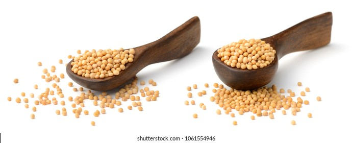 yellow mustard seeds in the wooden spoon, isolated on white