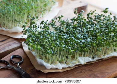 Yellow mustard sprouts on a wooden table, with garden cress sprouts in the background
